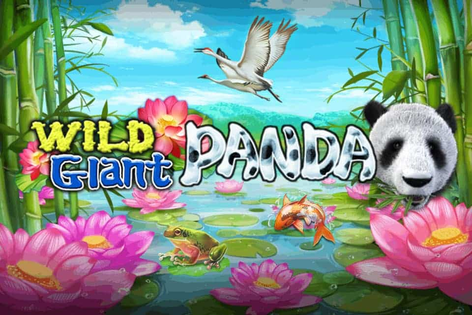 BANNER-WILD-GIANT-PANDA